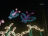 Luces de vida, Medellín2008