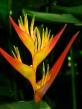 Jardín botánico-Medellin_0097