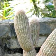 Jardín botánico-Medellin_0115