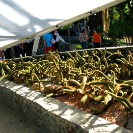 Jardín botánico-Medellin_0116