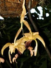 Orquídeasflores112