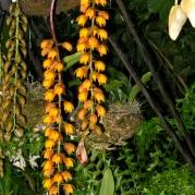 Orquídeasflores113