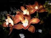 Orquídeasflores132