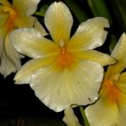 Orquídeasflores135