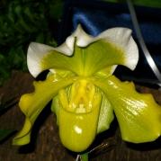 Orquídeasflores136