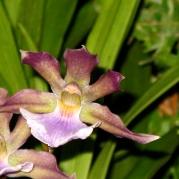 Orquídeasflores138