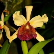 Orquídeasflores139