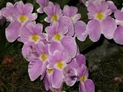 Orquídeasflores143