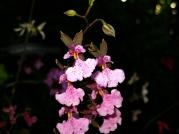 Orquídeasflores15