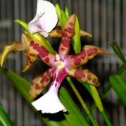 Orquídeasflores151