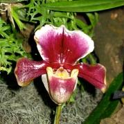 Orquídeasflores16