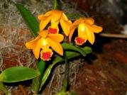 Orquídeasflores182
