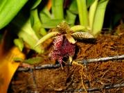 Orquídeasflores184