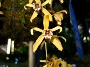 Orquídeasflores19