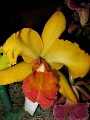Orquídeasflores192