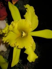 Orquídeasflores194