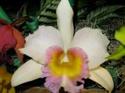 Orquídeasflores195
