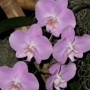 Orquídeasflores196