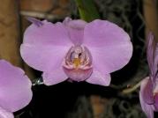 Orquídeasflores198