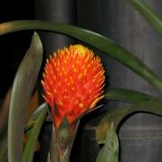 Orquídeasflores200