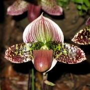 Orquídeasflores206