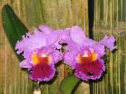 Orquídeasflores21