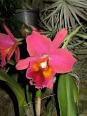 Orquídeasflores212