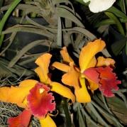 Orquídeasflores213
