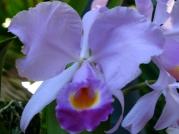 Orquídeasflores24