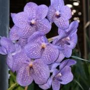 Orquídeasflores34