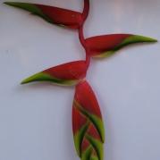Orquídeasflores42