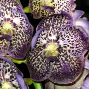Orquídeasflores59