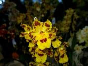 Orquídeasflores66
