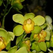 Orquídeasflores67
