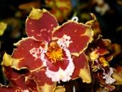 Orquídeasflores68