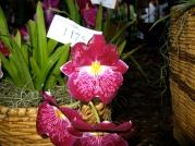 Orquídeasflores70
