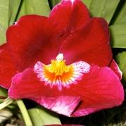 Orquídeasflores71