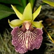 Orquídeasflores72