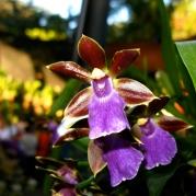 Orquídeasflores73