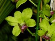 Orquídeasflores85