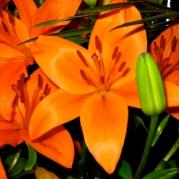 Orquídeasflores90