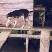 Jugando, Chocó, Colombia