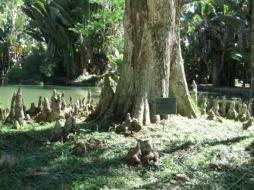 Jardin Botánico RJ